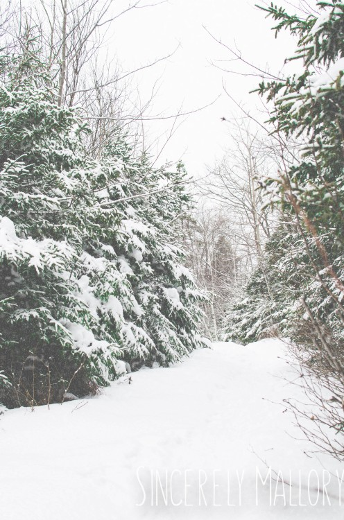 Creating Snow with Photoshop Elements
