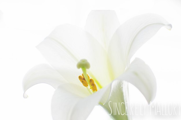 High Key Bloom