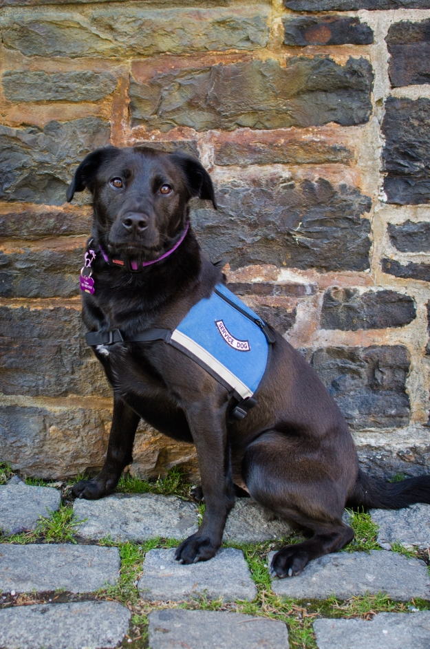 Halifax Portrait Photographer, Halifax Pet Photography